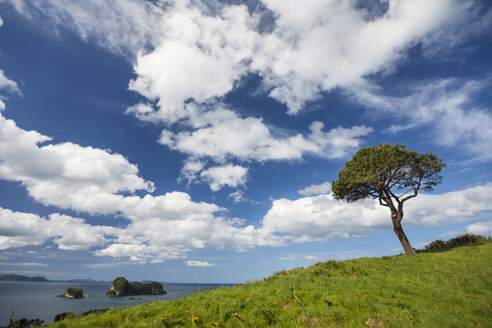 Clouds over lone tree growing on grassy hill of Coromandel Peninsula, New Zealand - AURF06754