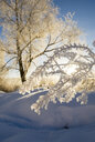 Frost on branch in winter along Animas River, Durango, Colorado, USA - AURF07003