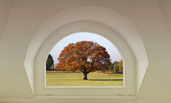 View through window at autumnal tree - KLR00709