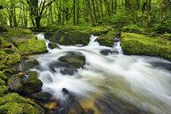 Great Britain, England, Cornwall, Liskeard, River Fowey at Golitha Falls - RUEF01971