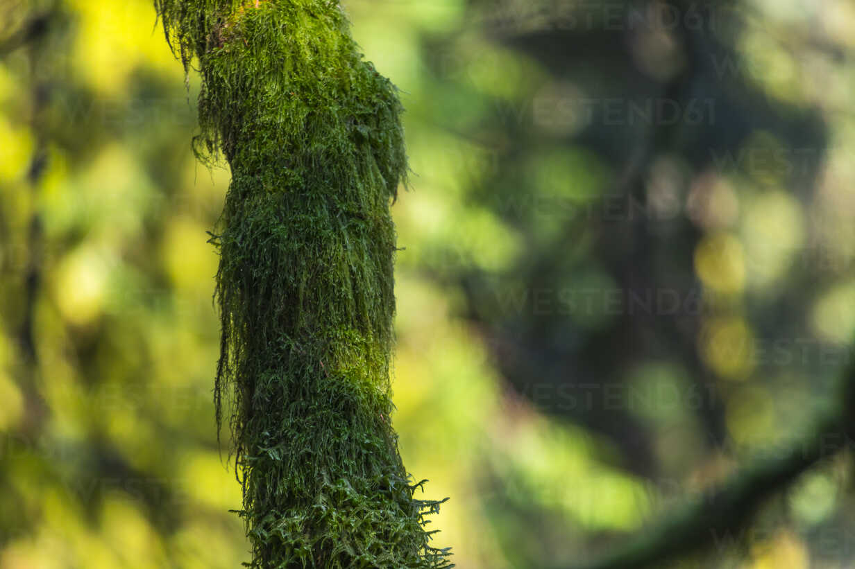 Tree trunk, moss-grown, bokeh in the background - MMAF00608 - Michael Malorny/Westend61