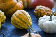 Ornamental pumpkins - JUNF01312