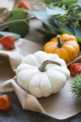Autumnal decoration, ornamental pumpkins - JUNF01318