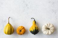 Row of rrnamental pumpkins - JUNF01333