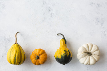 Row of rrnamental pumpkins - JUNF01333