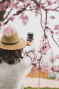 Rear view of young woman photographing cherry blossoms with smart phone at park - CAVF49007