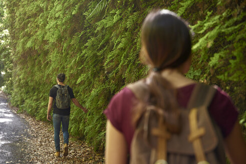 Spain, Canary Islands, La Palma, couple walking past lush green ferns in a forest - PACF00164