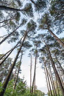 Forest in Latvia - KKAF02348