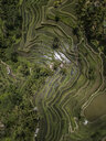 Indonesia, Bali, Ubud, Tegalalang, Aerial view of rice fields, terraced fields - KNTF01908