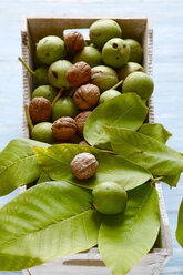 Peeled and unpeeled walnuts in wooden box - JTF01089