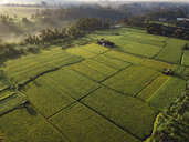 Indonesia, Bali, Ubud, Aerial view of rice fields - KNTF01979