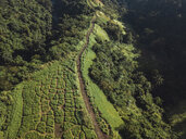 Indonesia, Bali, Ubud, Aerial view of path at hills - KNTF01994