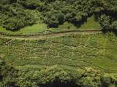 Indonesia, Bali, Ubud, Aerial view of path at hills - KNTF01997