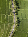 Indonesia, Bali, Ubud, Aerial view of rice fields - KNTF02009