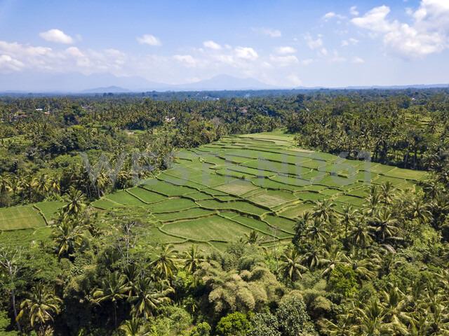 Indonesia, Bali, Ubud, Aerial view of rice fields - KNTF02018