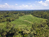 Indonesia, Bali, Ubud, Aerial view of rice fields - KNTF02018