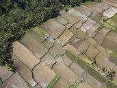 Indonesia, Bali, Ubud, Aerial view of rice fields - KNTF02024