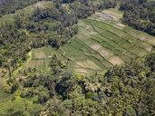 Indonesia, Bali, Ubud, Aerial view of rice fields - KNTF02030