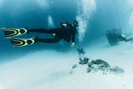 Diver exploring the Tubbataha Reefs Natural Park, underwater view, Cagayancillo, Palawan, Philippines - CUF44197