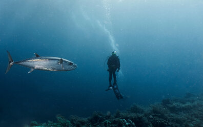 Diver and tuna fish, underwater view, Tubbataha Reefs Natural Park, Cagayancillo, Palawan, Philippines - CUF44200