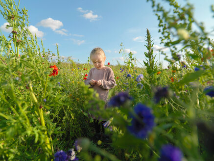 Child in wildflower field, Copenhagen, Hovedstaden, Denmark - CUF44236