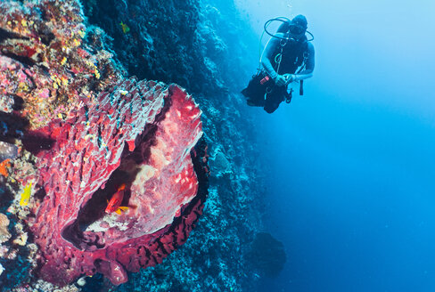 Underwater view of diver exploring coral reef at the Tubbataha Reefs Natural Park, Cagayancillo, Palawan, Philippines - CUF44290