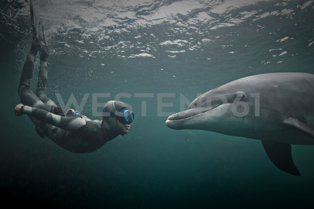 Woman freediving with bottlenose dolphin (Tursiops truncatus), Doolin, Clare, Ireland - CUF44814 - George Karbus Photography/Westend61