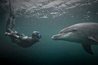 Woman freediving with bottlenose dolphin (Tursiops truncatus), Doolin, Clare, Ireland - CUF44814