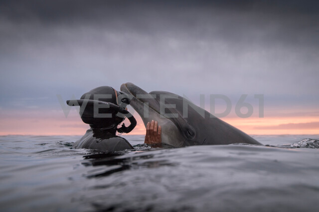 Woman freediving with bottlenose dolphin (Tursiops truncatus), Doolin, Clare, Ireland - CUF44865 - George Karbus Photography/Westend61