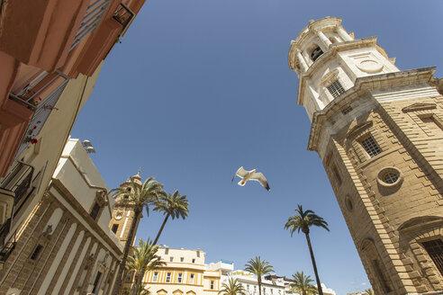Low angle view of seagull in Plaza de la Catedral in Cadiz, Spain - LUXF00808