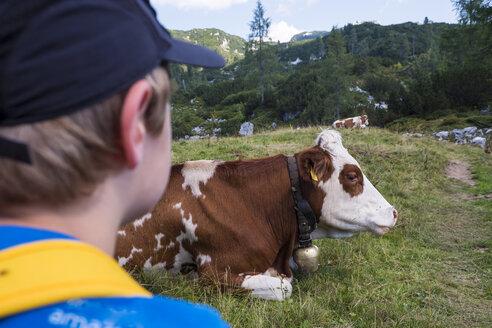 Austrian´, Ausseer Land, Boy watching cow on pasture - HAMF00388