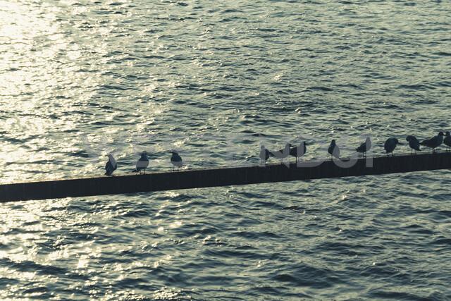 Genmany, seagulls on a bar over Rhine River - DWIF00955