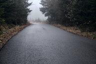 Bulgaria, wet asphalt after rain through the forest - BZF00464