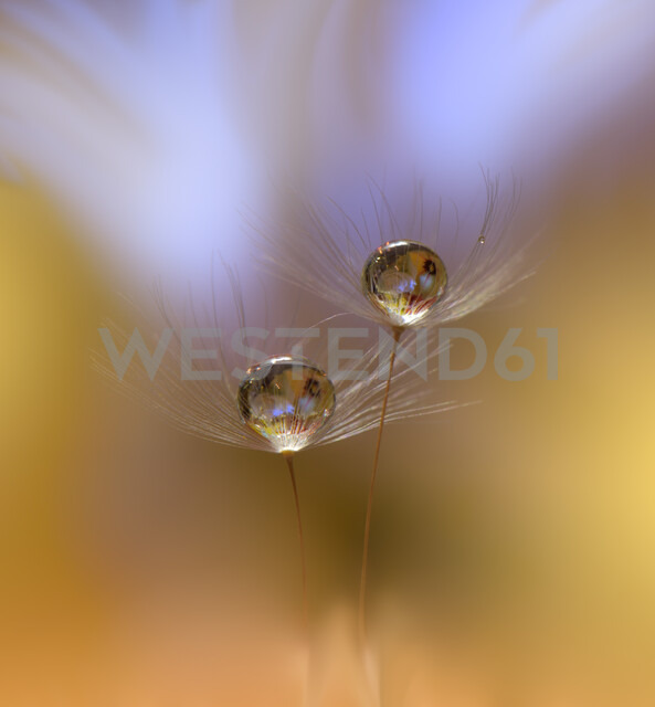 Close-up of water droplets on a leaf - INGF00106