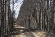 Germany, Brandenburg, Treuenbrietzen, Forest after forest fire - ASCF00895