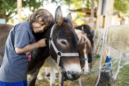 Boy stroking mule - VABF01638