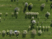 Aerial view rural green field and trees, Hohenheim, Baden-Wuerttemberg, Germany - FSIF03232