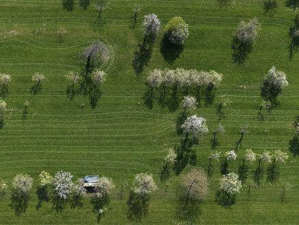 Aerial view rural green field and trees, Hohenheim, Baden-Wuerttemberg, Germany - FSIF03232