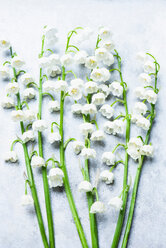 Lily of the valley flowers on white background - CUF45342