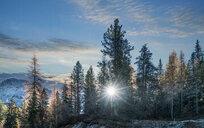 Sun among pine trees, Dolomites, Cortina d'Ampezzo, Veneto, Italy - CUF45528