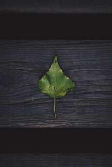 Autumn leave on wood - OCAF00369
