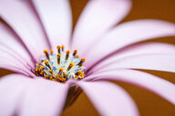 Close-up of pink petals on a flower - INGF00805