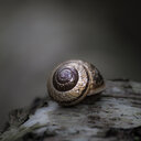 Close-up of snail on wood. - INGF01129