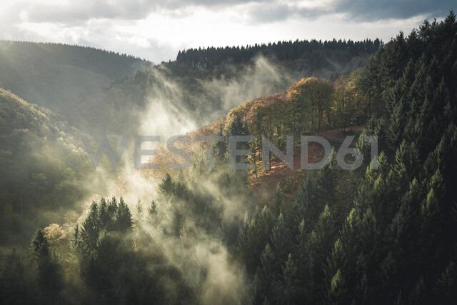 Autumn landscape with fog at sunrise - INGF01162 - Ingram Image/Westend61
