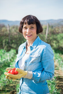 Woman with handful of tomatoes in vegetable garden - CUF46229