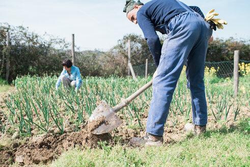 Mature couple working in vegetable garden - CUF46232