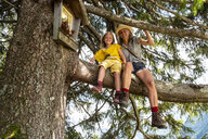 Portrait of smiling mother and daughter sitting in a tree - HAMF00420