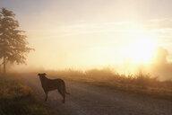 Dog on idyllic sunrise dirt road - FSIF03277