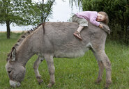 Cute girl laying on donkey in field - FSIF03280