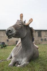 Girl laying on donkey - FSIF03370